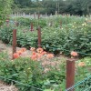 Allotments meeting – 6.30pm 19th October