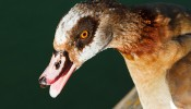 Best of Wildlife in Wapping 2013 – photos