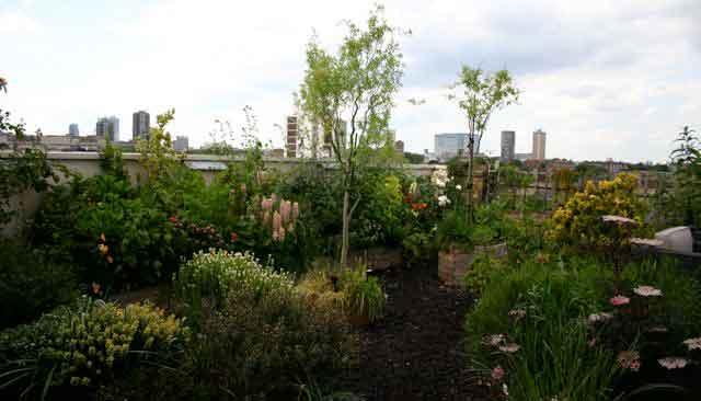 Wapping Garden 2