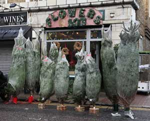 Wapping_Christmas_Trees
